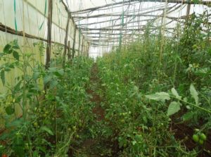 photo credit Daniel Kwatuha established greenhouse-Archived
